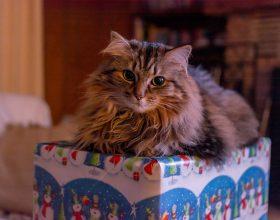 Vybírejte vánoční dárky pro své blízké ve formě atrakcí už dnes