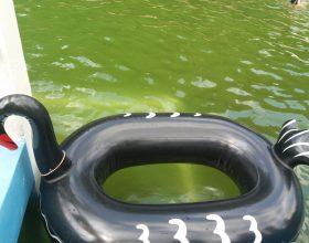 Bumper Boats – lodičky s motorkem